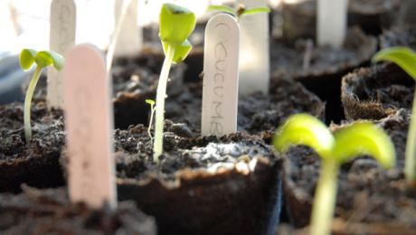planting a church metaphor